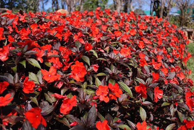 Le jardin Da Lat, le paradis des fleurs pour les touristes
