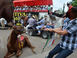 Professora criou um abaixo-assinado onde pede que não sejam usados animais durante Cavalgada na Expoacre. Imagem foi flagrada no dia 27 de julho de 2014 durante Cavalgada (Foto: Rayssa Natani/G1)