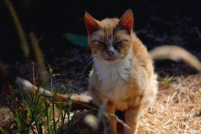 TV Cat and the new normal of climate change