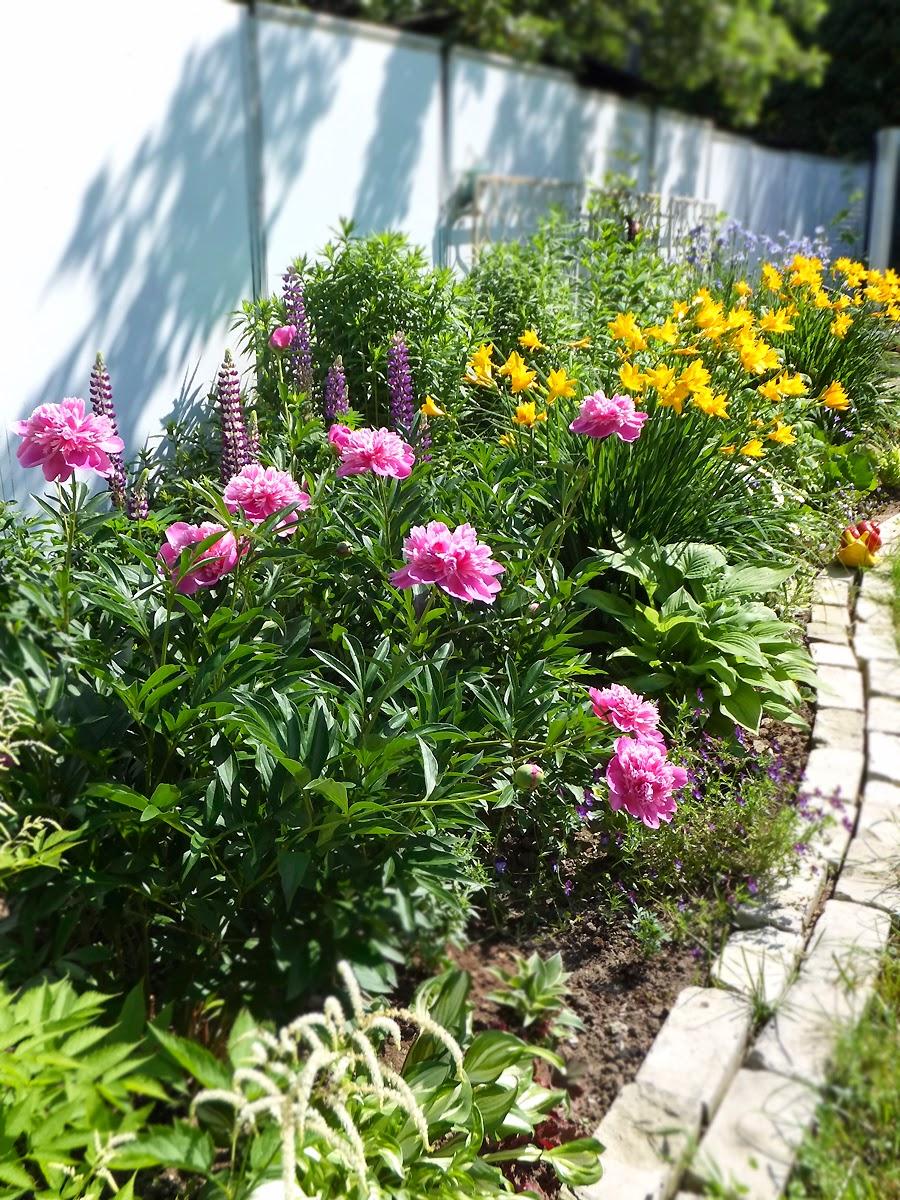 Цветы в саду весной