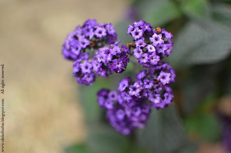 nature flowers purple photography photos