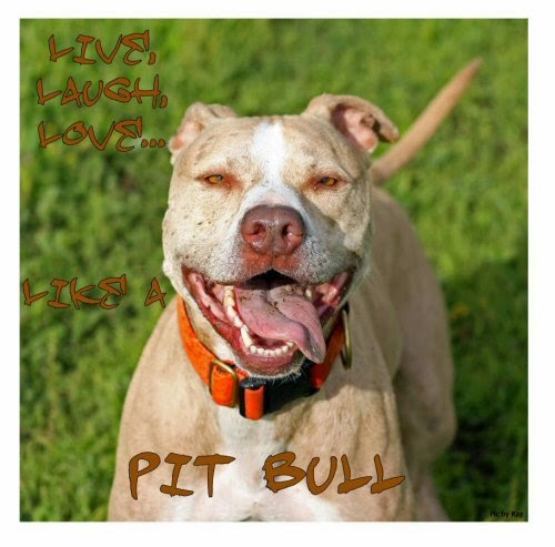 Live, laugh, love, like a Pit Bull.