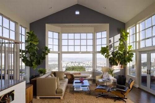 indoor trees decor