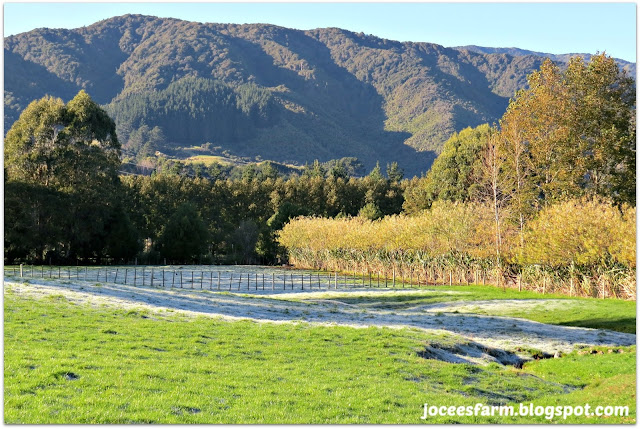 Late autumn in New Zealand | joceesfarm.blogspot.com