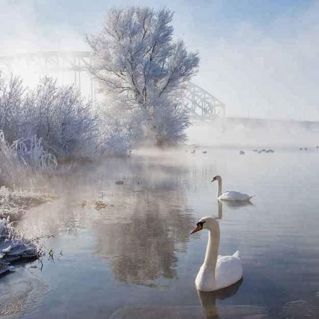 Bellas fotografías invernales