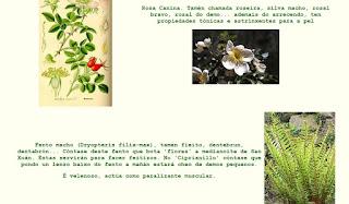 Herbas de San Xoán
