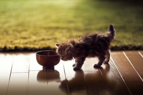 anak-kucing-dan-mangkuk
