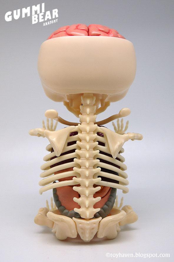 Anatomy gummy bear 4017565 - follow4more.info