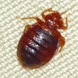 bed bugs,macon,georgia,mattress.exterminate kill,remove,heat