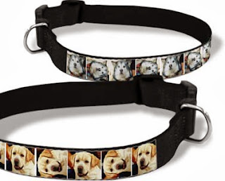 best collar for your puppy dog training