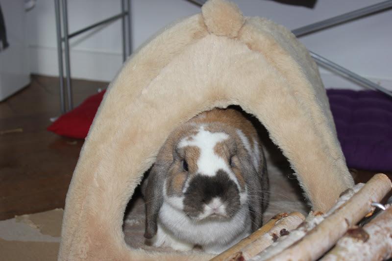 Boogyland co dans mon petit igloo for Dans mon igloo