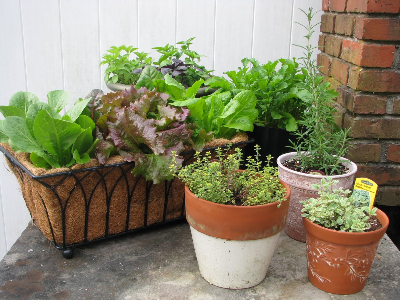 Easy Container Gardening Combining Herbs And Vegetables Desperate Gardener
