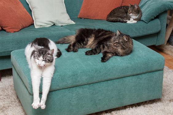 Ennen kissanäyttelyyn ilmoittautumista tulee huomioida muutama seikka