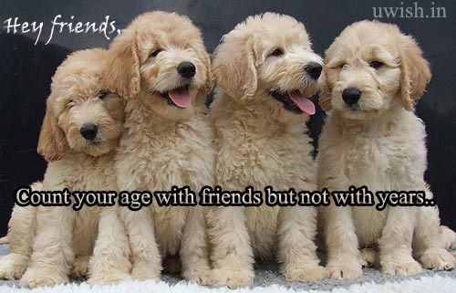 Count your age with your friends but not with years. Hey friends wishes and greetings with cute dogs