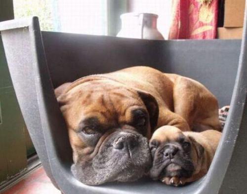 Las fotos de perros más graciosas y divertidas