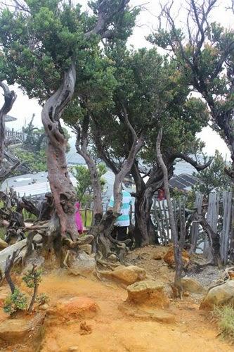 Taman Wisata Gunung Tangkuban Parahu