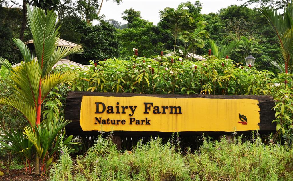 Dairy Farm Singapore Singapore Quarry Dairy Farm