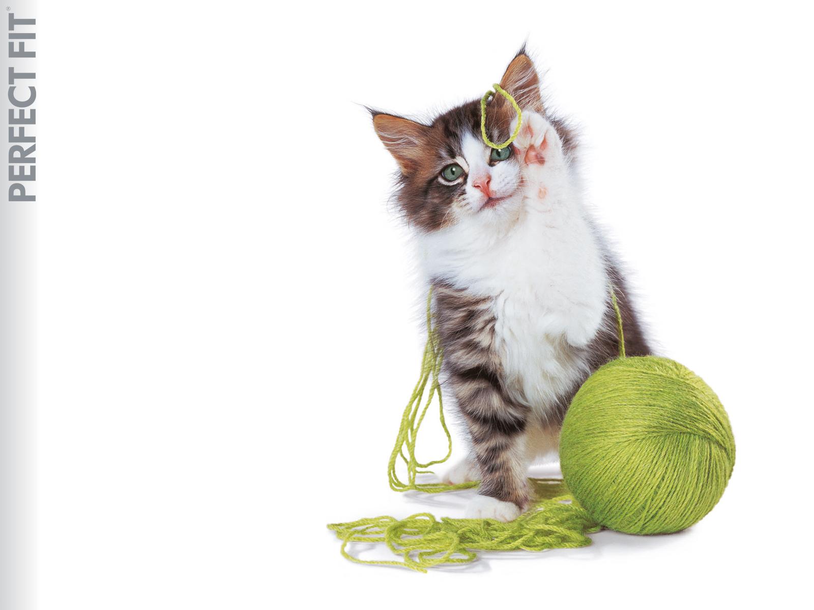 http://1.bp.blogspot.com/-59Dwvttr5iQ/T-bBzZAJCzI/AAAAAAAAGQU/nfbvkkfsH1g/s1600/Cat-wallpaper-11.jpg