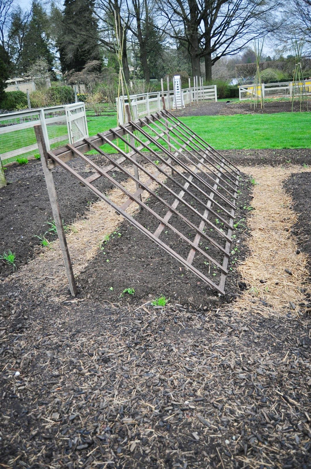 Build a Leaning Trellis for Climbers and Shade Loving Lettuces