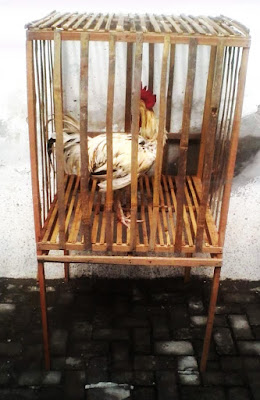 Contoh Kandang Jemur Ayam Pelung