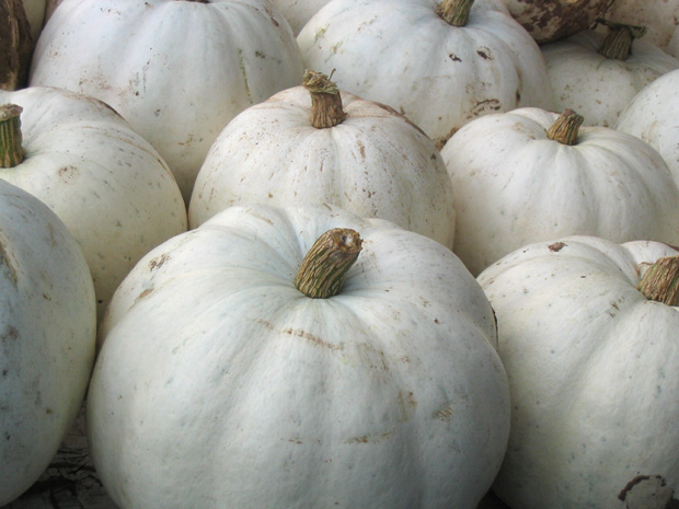 At home with elaine white pumpkins for White pumpkin designs