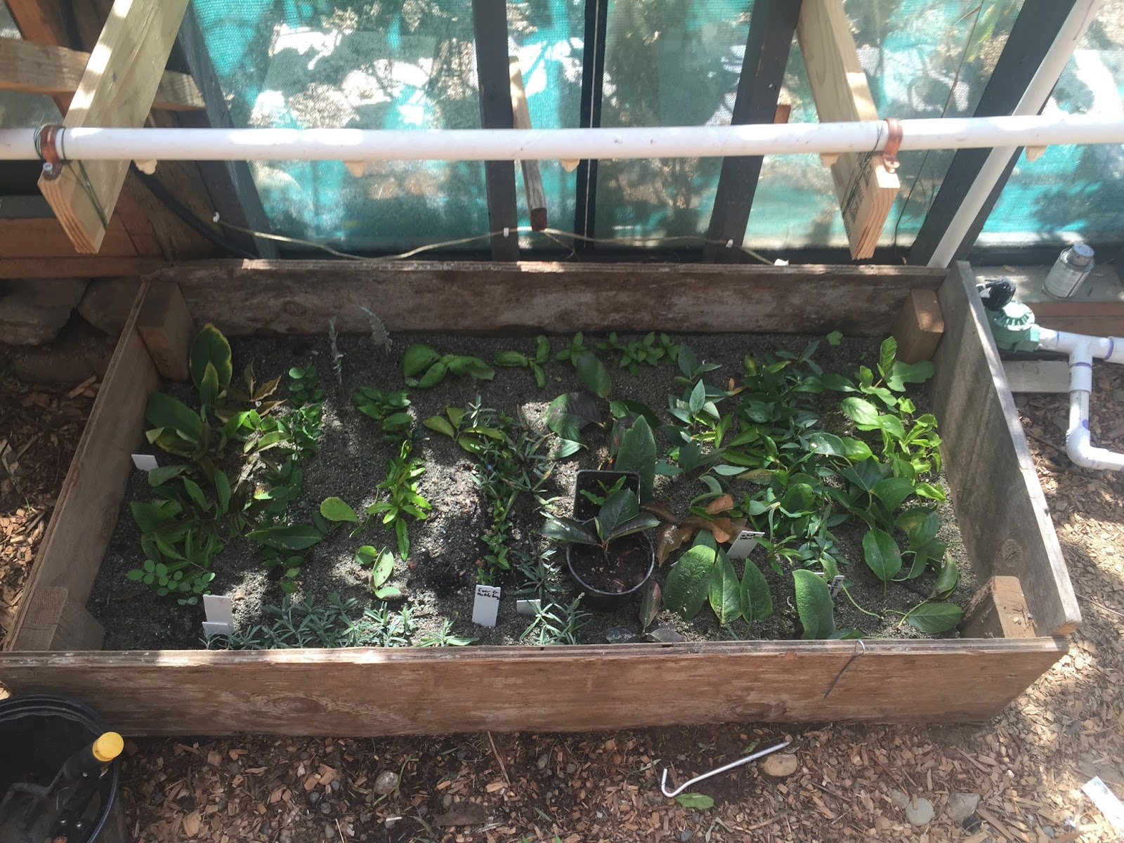 adventures with a tubie: diy plant propagation misting system using