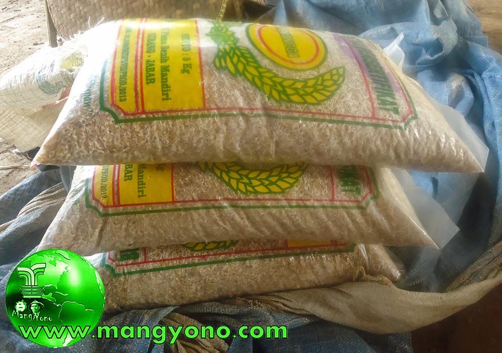 3 Kantong atau 15 Kg Benih padi MEKONGGA sudah berkecambah.