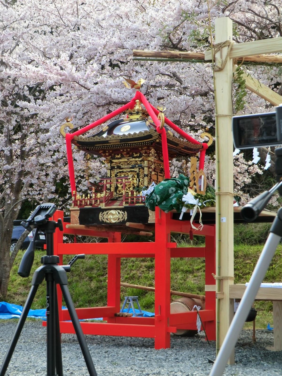 桜の舞台で舞を奉納(石巻市雄勝町)