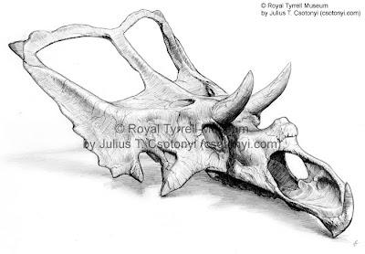 Chasmosaurus skull