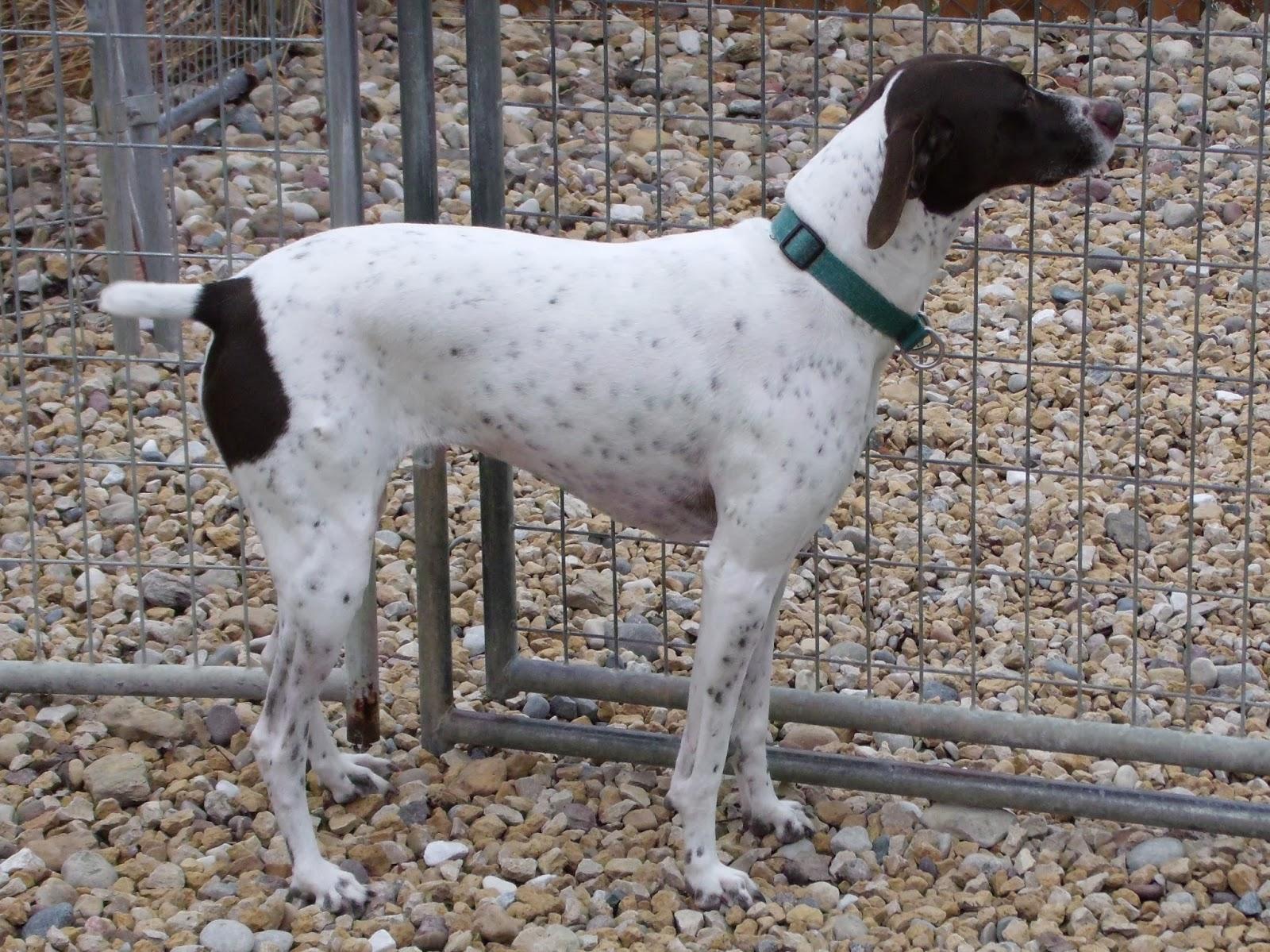 Cindi Myers Art : Dachshund, German Shorthaired Pointer, Terrier mix ...
