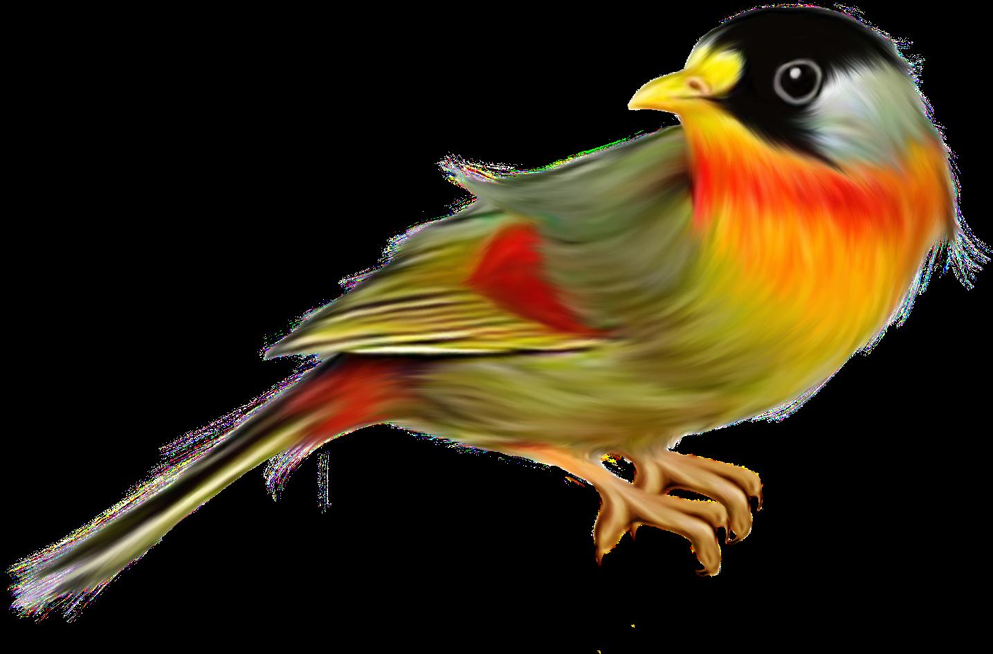 14 Gambar Lukisan Burung - SENI RUPA