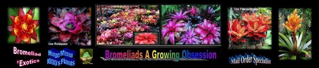 Bromeliad Exotics