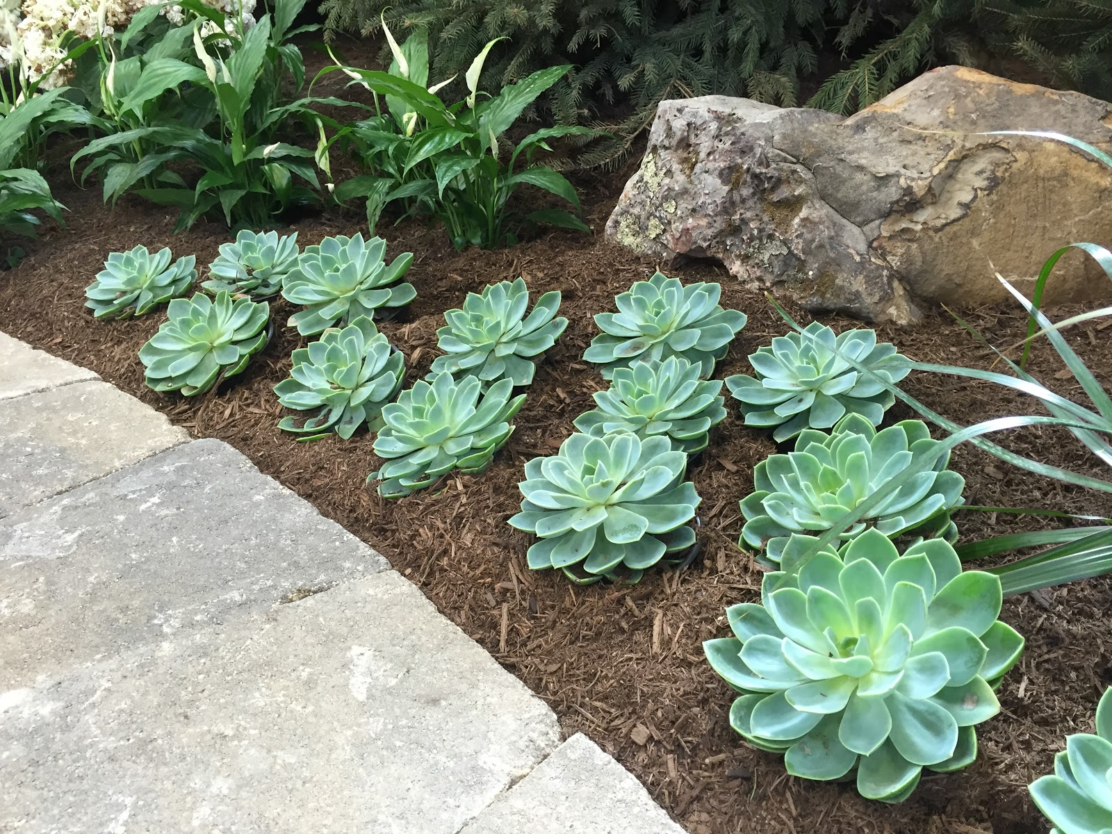 garden show succulents