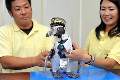 日本 企鵝站長 志摩