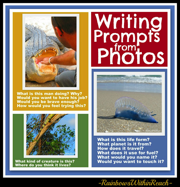 photo of: Writing Prompts from Photographs: Alligator, Iguana, Man of War and more!