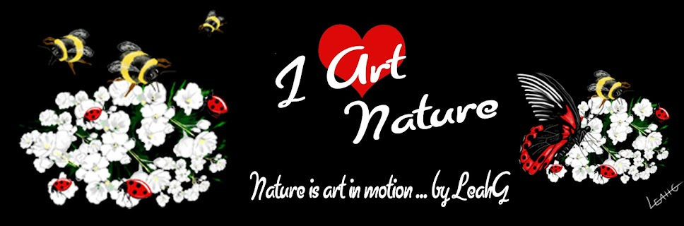 Nature Art Blog