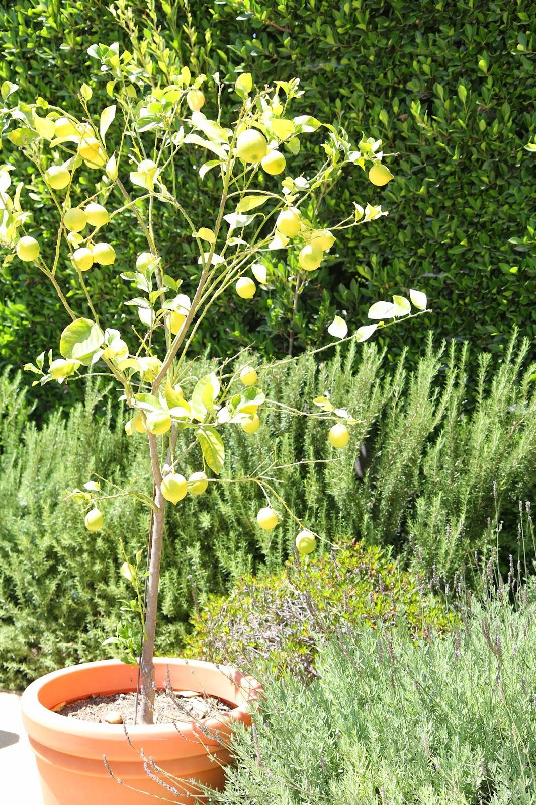 Lemon Tree: Simple Summer Fruit Bowl; Nora's Nest