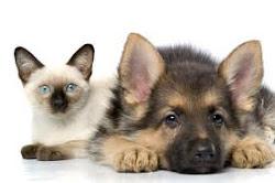 Forever si prende cura anche dei nostri amici animali!