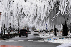Toomer's Corner after 2010 National Football Championship
