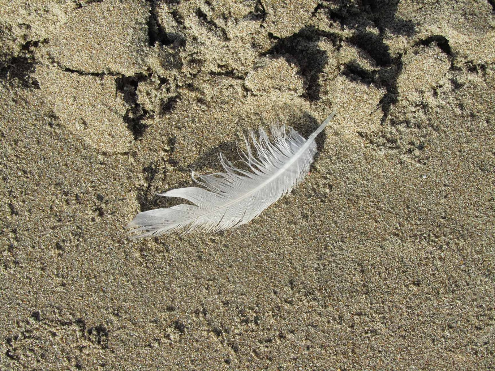 feather II in the sand