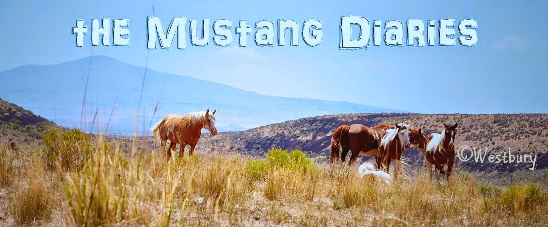 Mustang Diaries