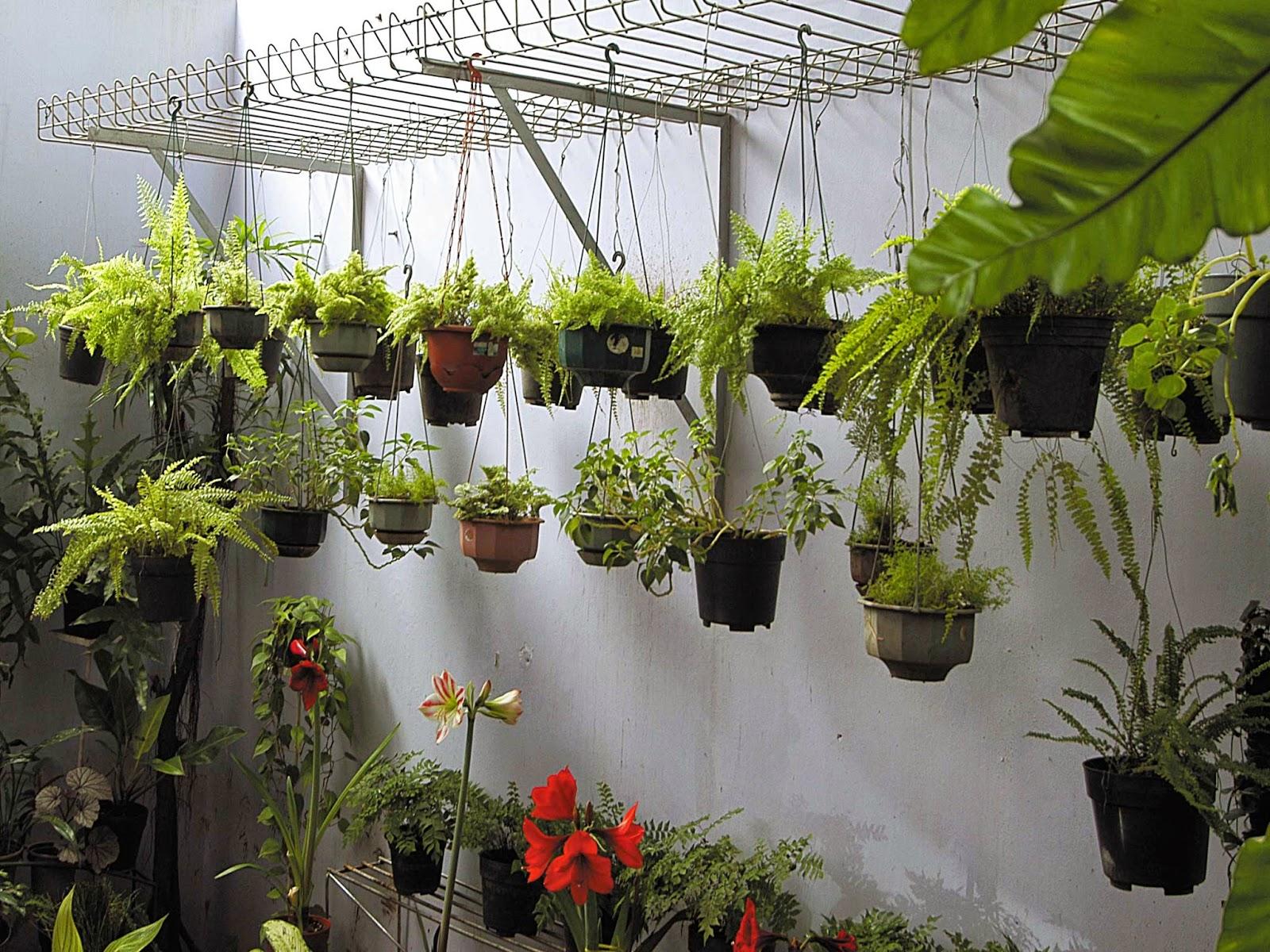 tips merawat tanaman hias gantung ragam tanaman