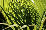 Woven palms