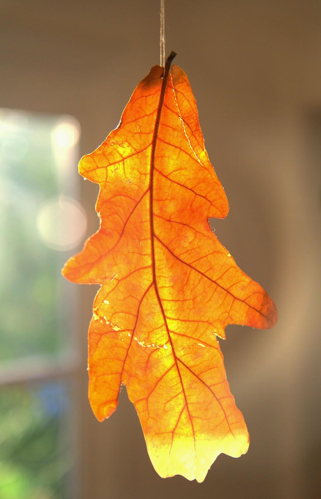 Falling Leaf DIY