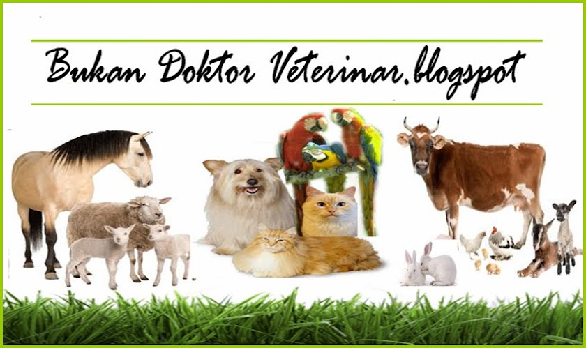 bukan doktor veterinar