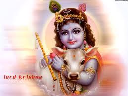 Krishna Loves Cow