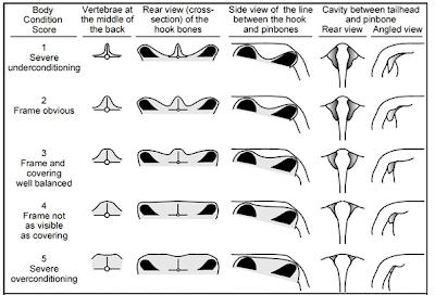 Bảng cho điểm tính trạng trên bò.
