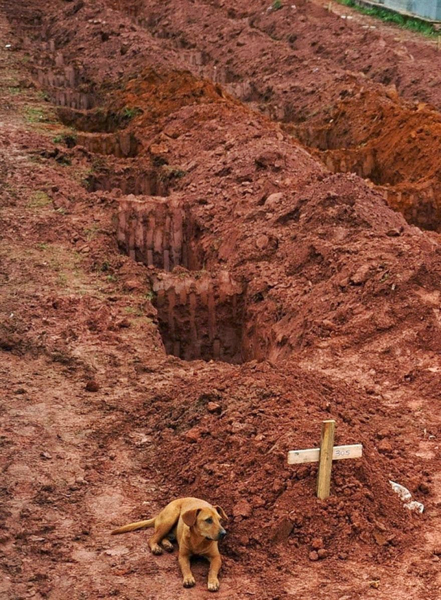 "30 of the most powerful images ever - A dog named ""Leao"" sits for a second consecutive day at the grave of her owner, who died in the disastrous landslides near Rio de Janiero in 2011."