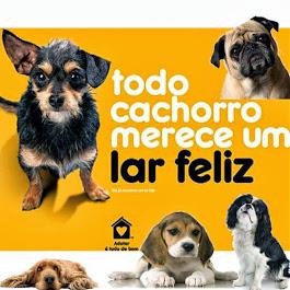 Todo cachorro merece um lar feliz