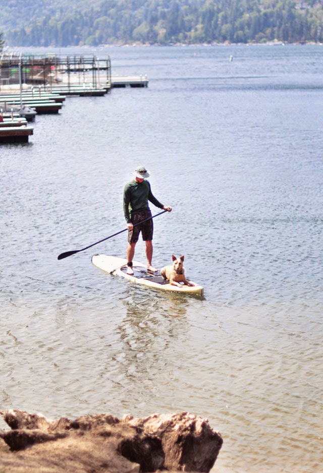 man and his dog paddle boarding, paddle board on the lake